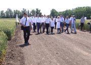 Аграрии Кубани рассказали Кондратьеву об уборке урожая