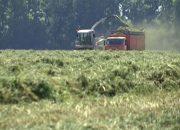 На Кубани планируют заготовить 2,5 млн тонн кормов для животных