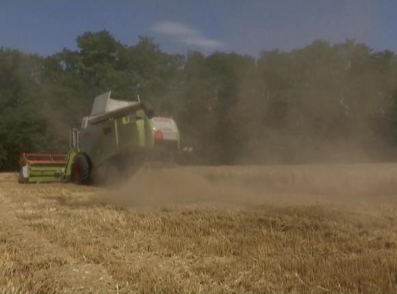 На Кубани убрали озимый ячмень и приступили к озимой пшенице