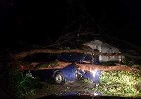 В Сочи во время ночной грозы подтопило улицы и ветром повалило деревья