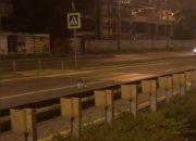 В Краснодаре енот ночью гулял по Кубанской набережной