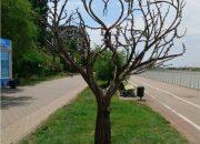 В краснодарском парке установили арт-объект «Дерево любви»