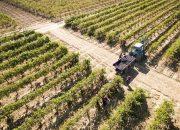 На Кубани впервые пройдет забег по виноградникам Фанагории