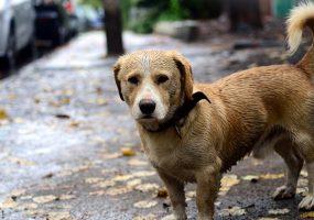 В Краснодаре мужчина угнал машину, чтобы укрыть собаку от дождя