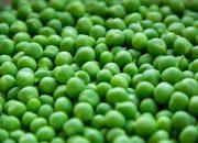 На Кубани предприятия выработали более 50 млн банок консервов зеленого горошка