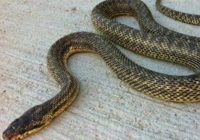 Ученые Сочинского нацпарка помогли описать новый вид змеи