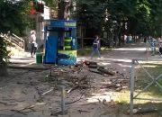 В Краснодаре дерево упало на тротуар