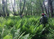 В Мостовском районе 500 казаков продолжат искать пропавшего мальчика