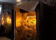 В Краснодаре мужчина в своей квартире организовал теплицу для конопли