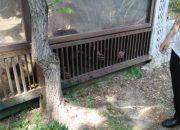 В краснодарском «Сафари-парке» проверили условия содержания орангутангов