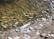 В Новороссийске в месте прорыва коллектора зафиксировали гибель рыбы