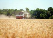 Стоимость российской пшеницы упала до минимума за сезон