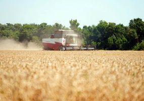 Кубанские аграрии уже собрали более 2 млн тонн зерна