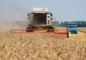 На Кубани планируют убрать 1,6 млн га ячменя и пшеницы