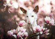 Собаки в кадре: эти 30 фотографий признаны лучшими в 2019 году