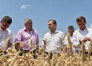 Кондратьев оценил ход уборки озимой пшеницы на полях Гулькевичского района