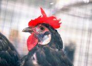 С начала года ветеринарные лаборатории Кубани провели более 3 млн исследований