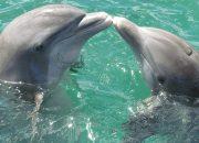 В Туапсе пройдут тренинги по спасению дельфинов
