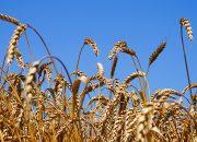 В Ейске 2 августа пройдет праздник «Урожай-2019»