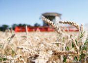 На Кубани урожай зерна превысил 10 млн тонн