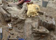 На Кубани нашли второй в мире череп доисторического носорога