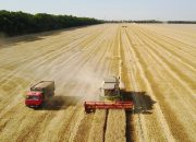 Аграрии Краснодарского края собрали рекордный урожай зерна
