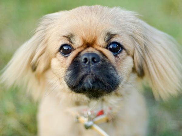 5 суперспособностей собак: от диагностики рака до предупреждения о приступах