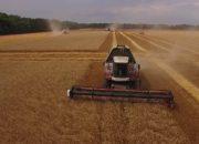 Аграрии Кубани собрали рекордный урожай зерна