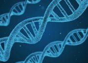 В ДНК человека нашли неизвестный вид живых существ