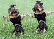 Ученые: любовь к собакам передается по наследству