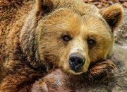 Специалисты Сочинского нацпарка рассказали, что делать при встрече с медведем