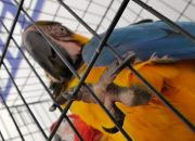 За содержанием животных в цирках и дельфинариях будут следить общественники