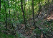 В лесу под Крымском нашли более 80 минометных снарядов