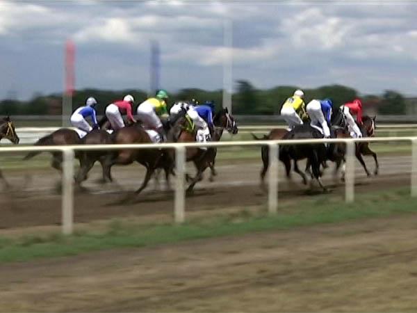 Лошади завода «Восход» заняли первое место на скачках в Краснодаре