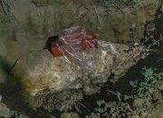 В Анапе при строительстве жилого комплекса нашли авиационную бомбу