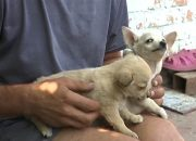 В Усть-Лабинском районе мужчина повесил щенков, чтобы отомстить дочери