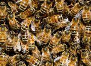 На Кубани летом зафиксировали случаи массовой гибели пчел