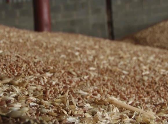 В Новокубанском районе заработал новый семенной завод