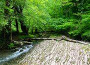 В лесу под Сочи заблудились туристы из Нижневартовска
