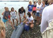 В Сочи прошел тренинг по оказанию помощи дельфинам