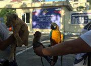 В Сочи у фотографа изъяли обезьяну, попугая и львенка. Видео
