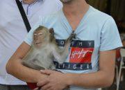 В Анапе у фотографов изъяли обезьян Машу и Жорика