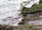 В Анапе на всех пляжах запретили купаться в море
