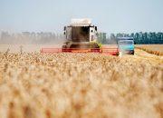 На Кубани приступят к банкротству агрокомплекса «Кущевский»
