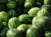 Медики рассказали о скрытой опасности арбузов