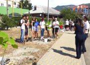 В Геленджике школьники посадили на аллее 24 павлонии