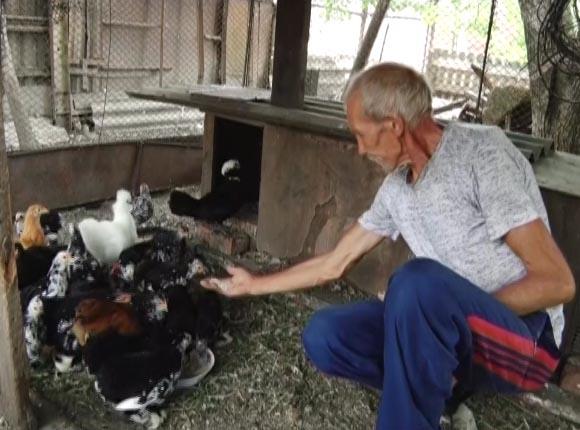 Житель Новокубанского района выводит куриц благородных чистокровных пород