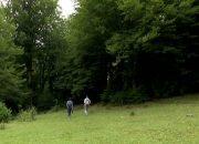 В Кавказском заповеднике открыли маршрут «Тропой леопарда»