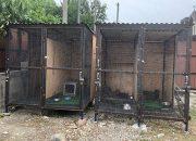 В Новороссийске предприниматели незаконно содержали ягуаров, рысей и львов