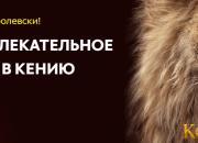 По следам «Короля Льва». Как всей семьей отправиться в африканское приключение
